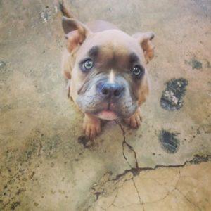 Saturday Puppy Training Class @ South Bark Dog Wash | San Diego | California | United States