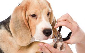 Nail Trimming @ South Bark Dog Wash | San Diego | California | United States